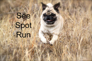 see_spot_run