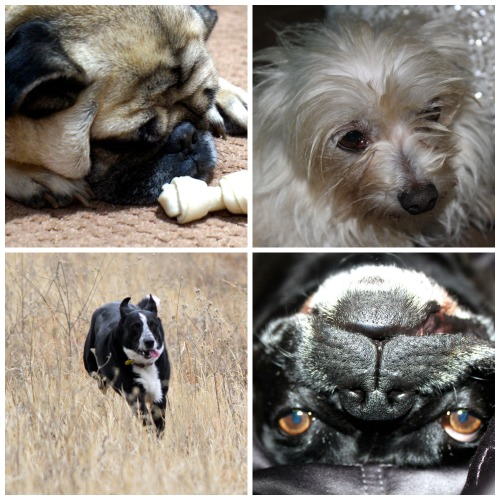 various_dogs