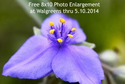 free_photo_enlargement.jpg
